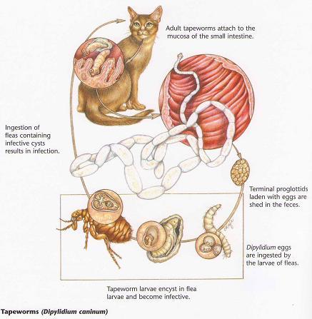 medicament pentru diferiți viermi